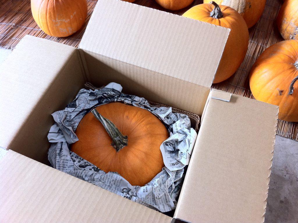 ハロウィンかぼちゃ翌日発送