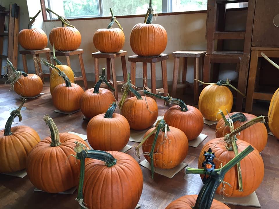 2019年産ハロウィンかぼちゃ